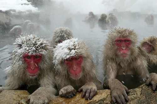 thermal hot springs monkey butts