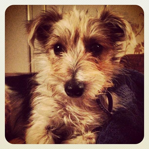 puppy mill dog rehabilitation