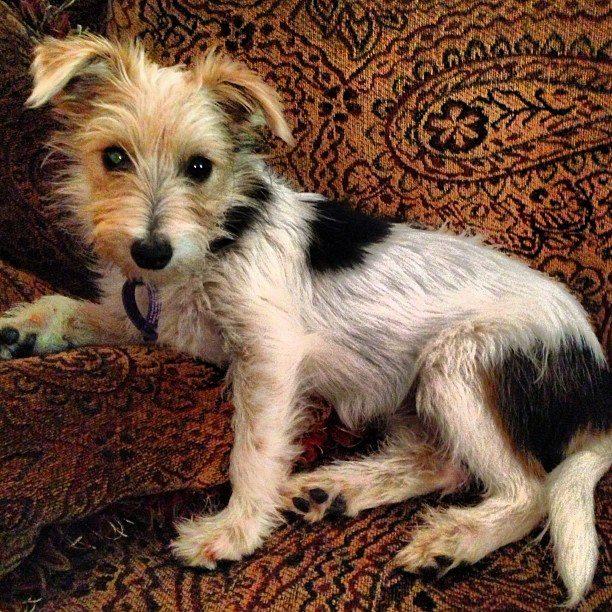 rehabilitation puppy mill farm animal