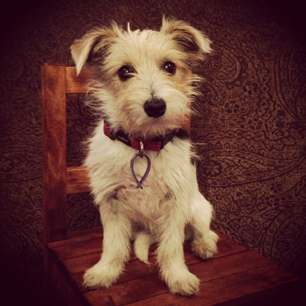 puppy mill farm rehabilitation rehome new
