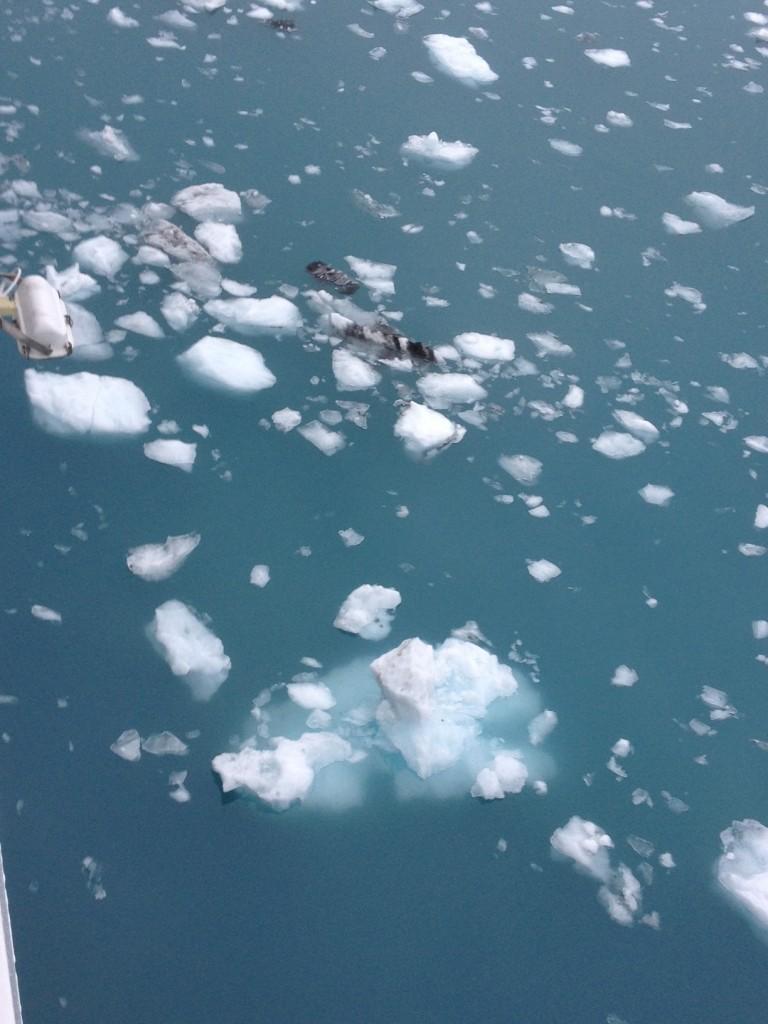 floating ice2