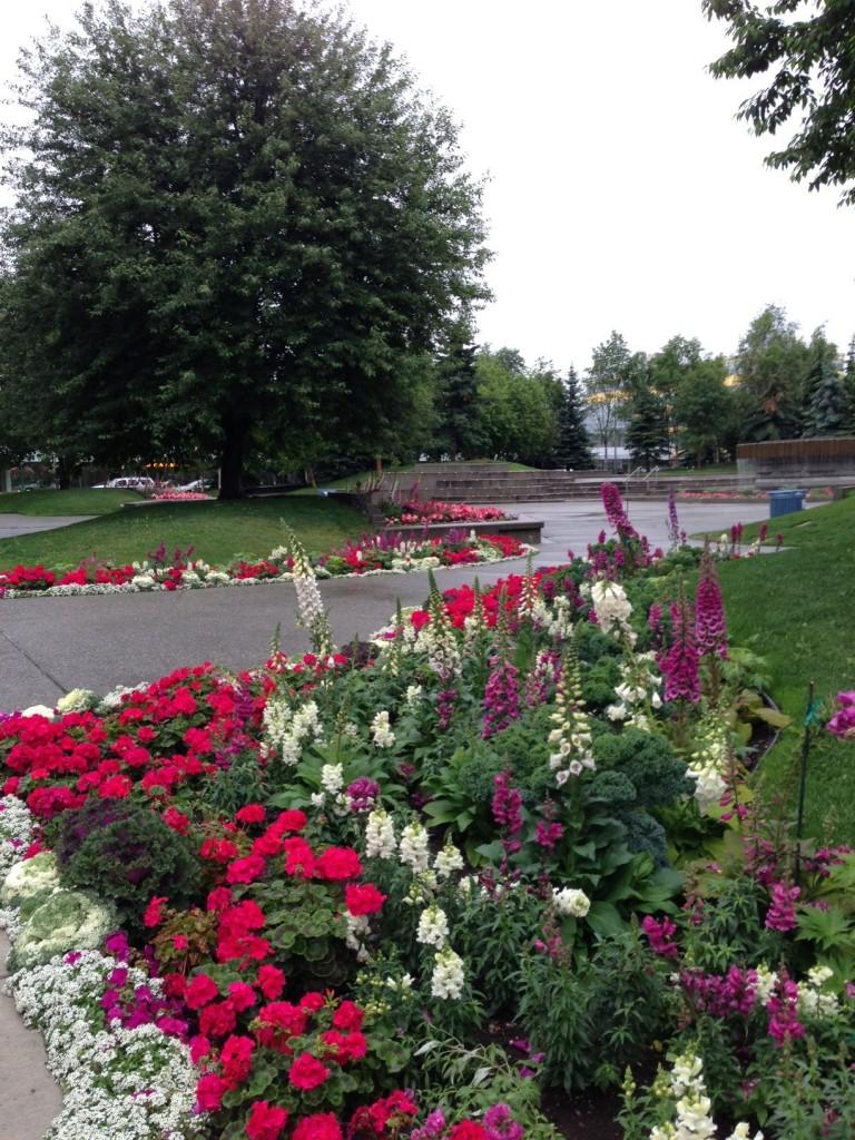 town park pic 1
