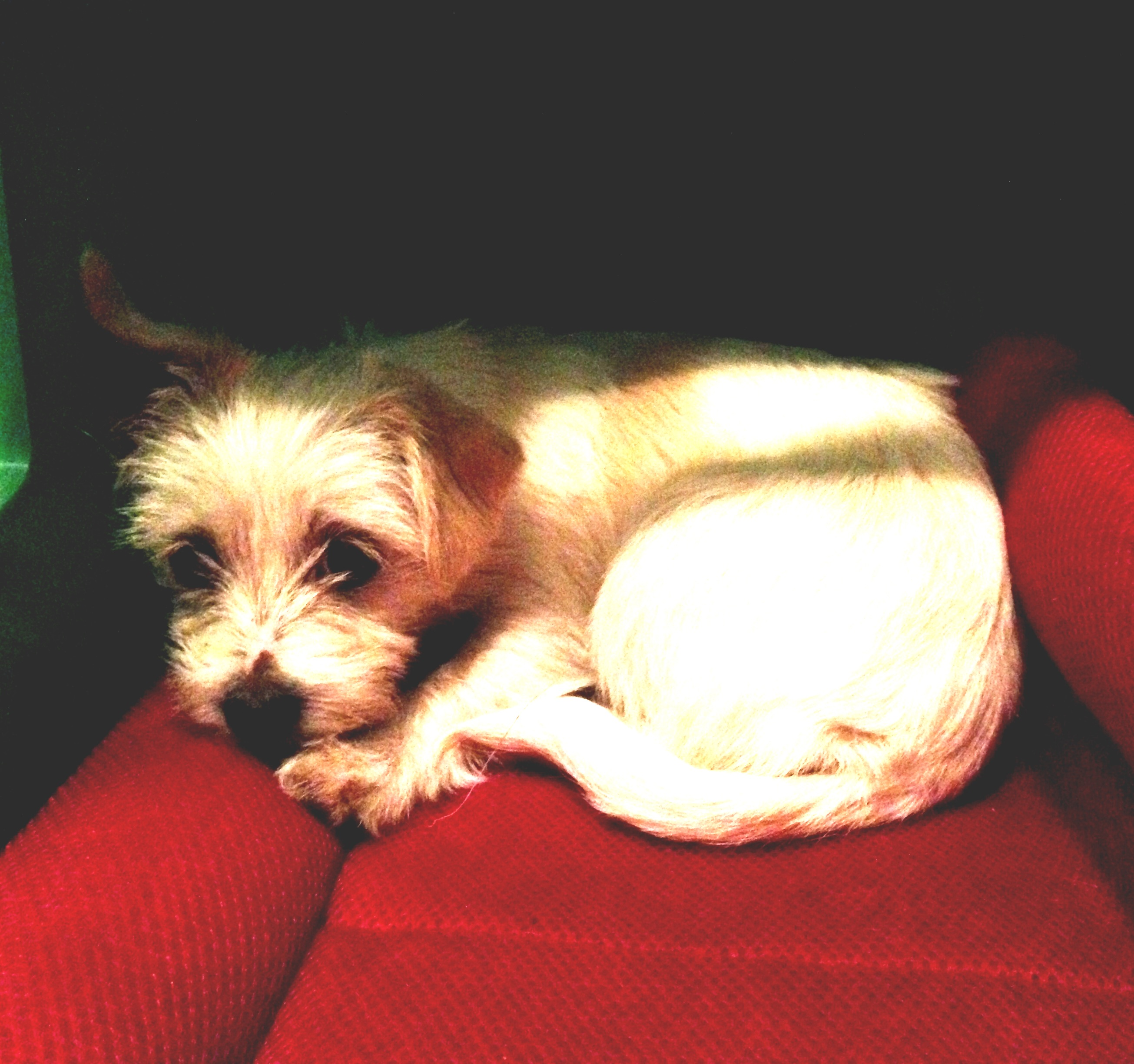 alaska rescue puppy mill dog