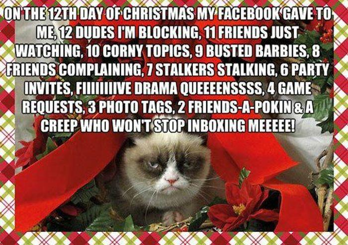 grumpy cat 12 days christmas