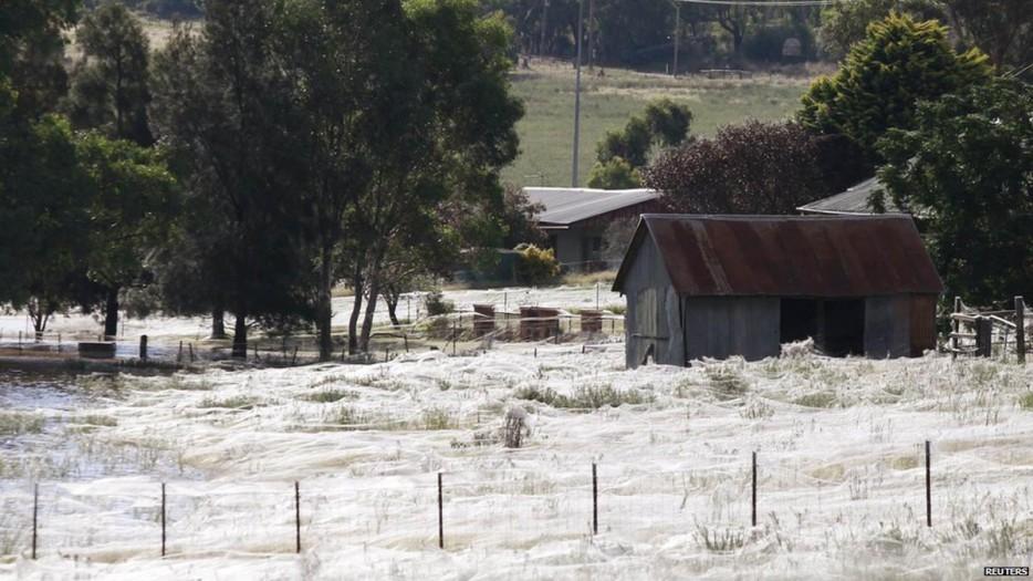 fields of spider webs 1