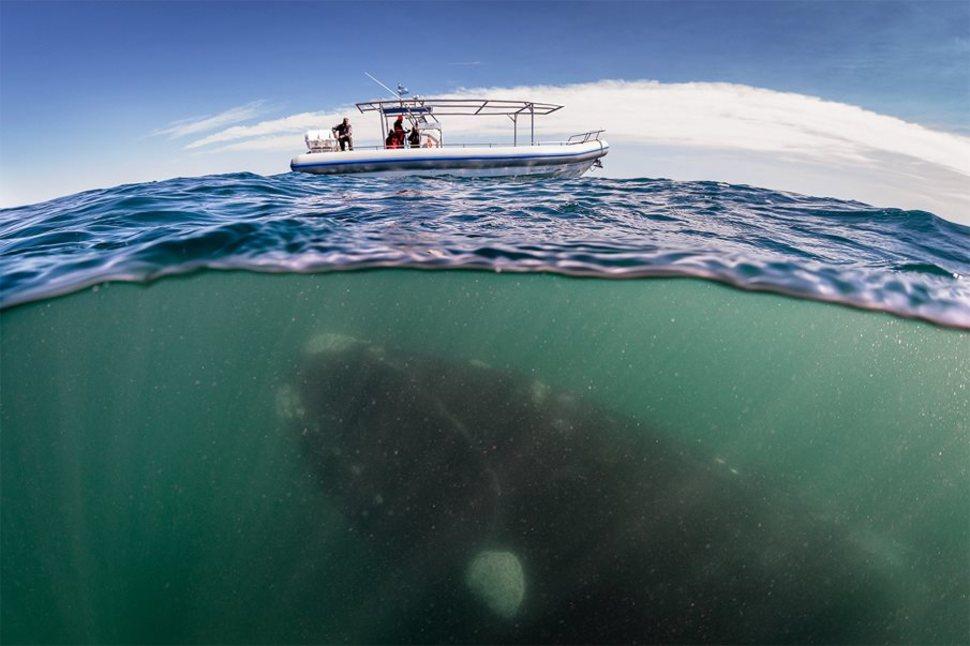 Underwater Argentina
