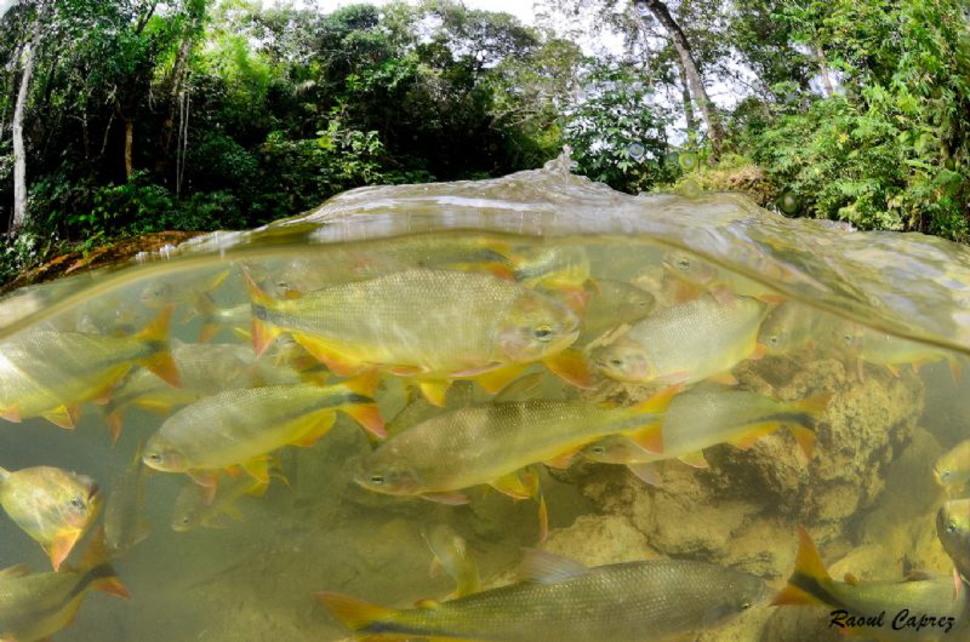 Underwater Brazil