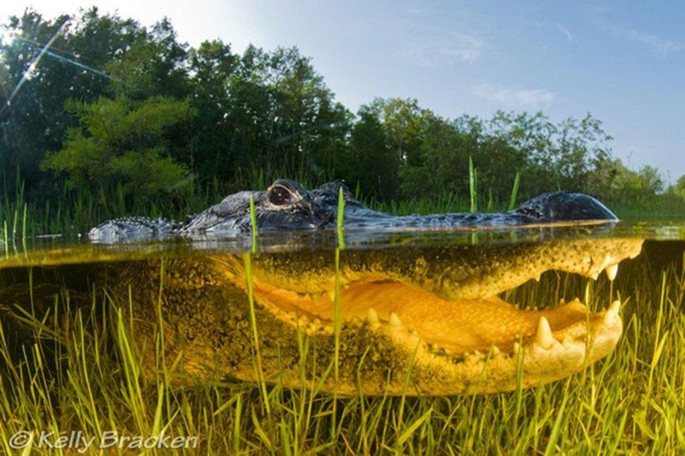 Underwater Everglades Florida