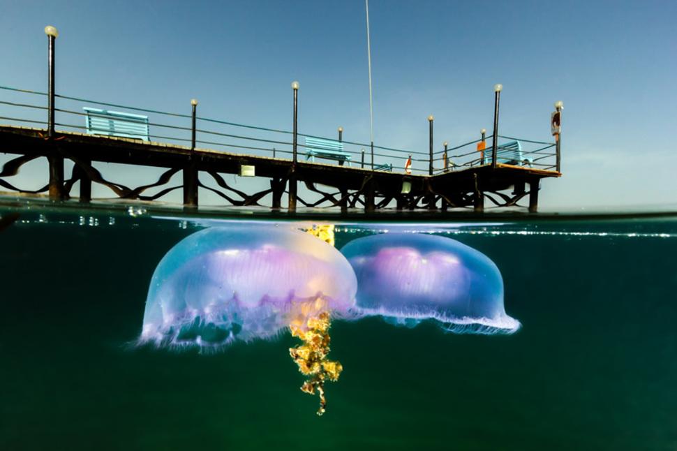 Underwater Neweba Egypt