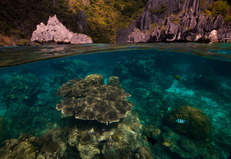 Underwater Palawan Islands Philipines