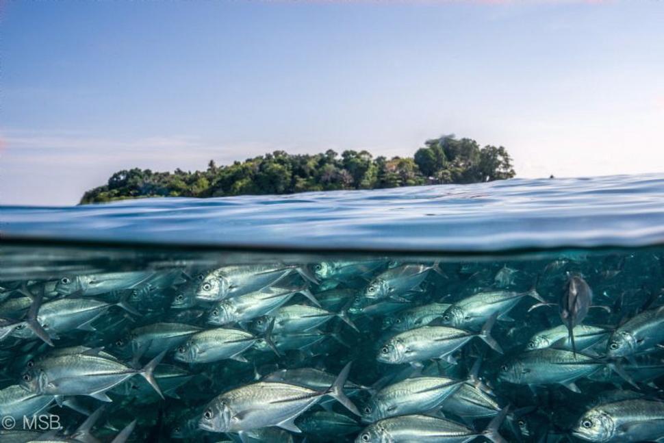 Underwater Sipadan Island Malaysia