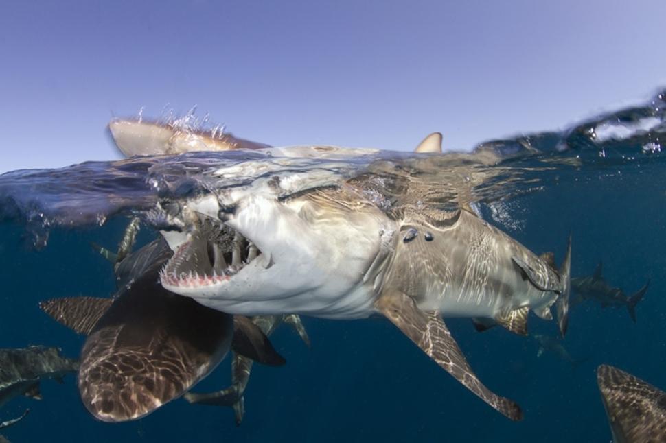 Underwater South Africa