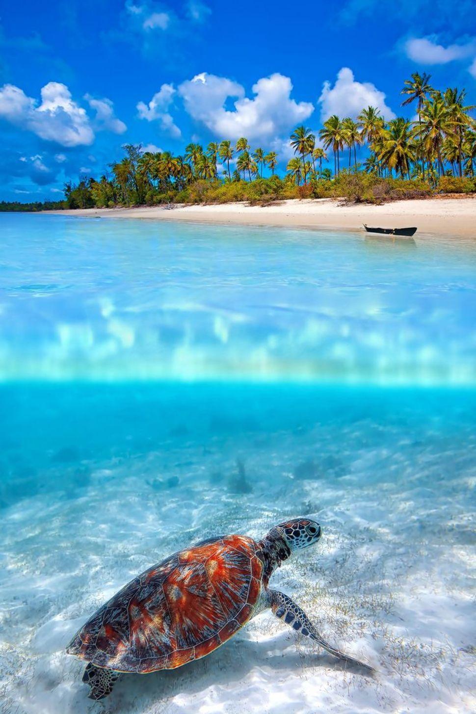 Underwater Zanzibar Tanzania