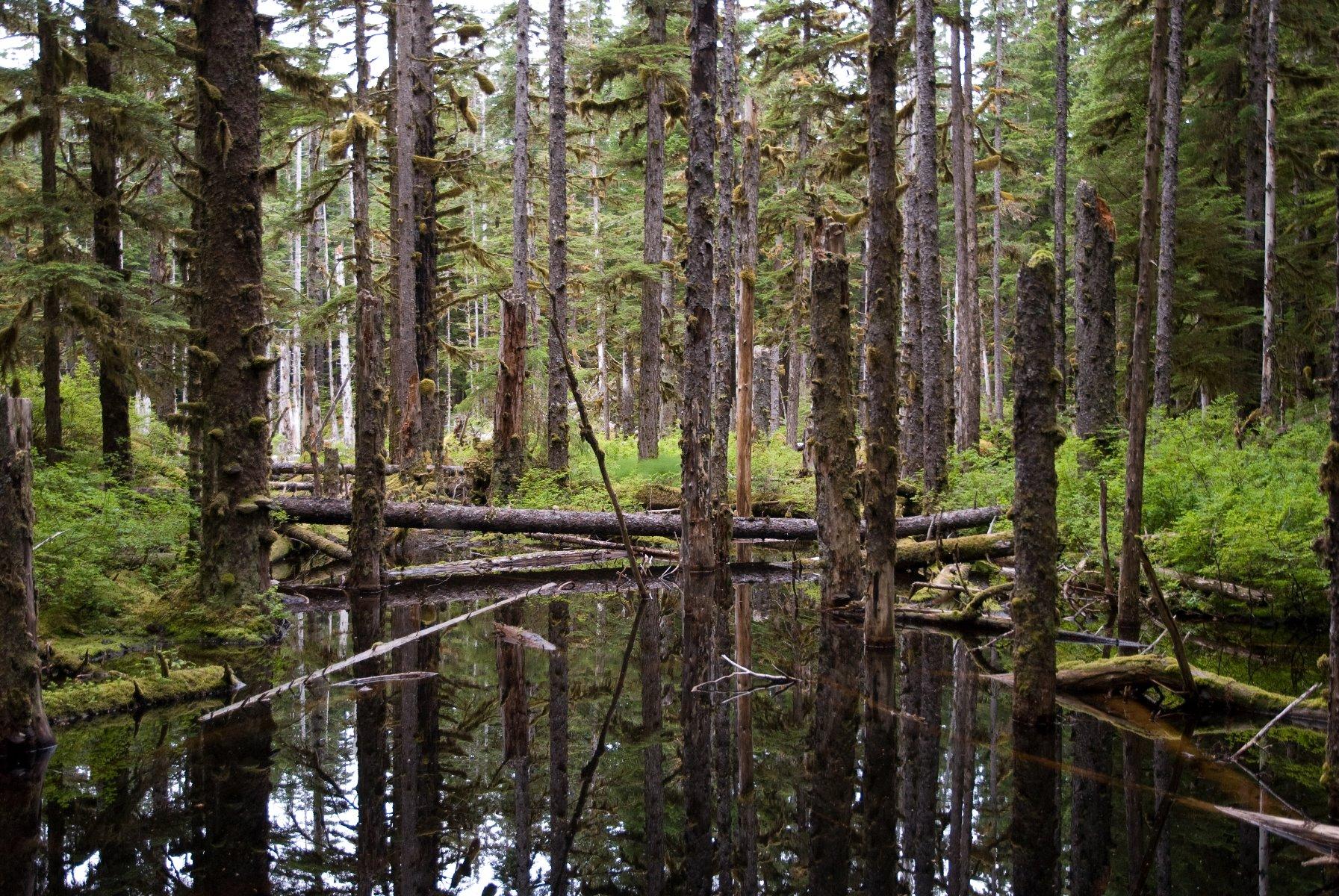 Lush rainforest leading to Bartlett Lake