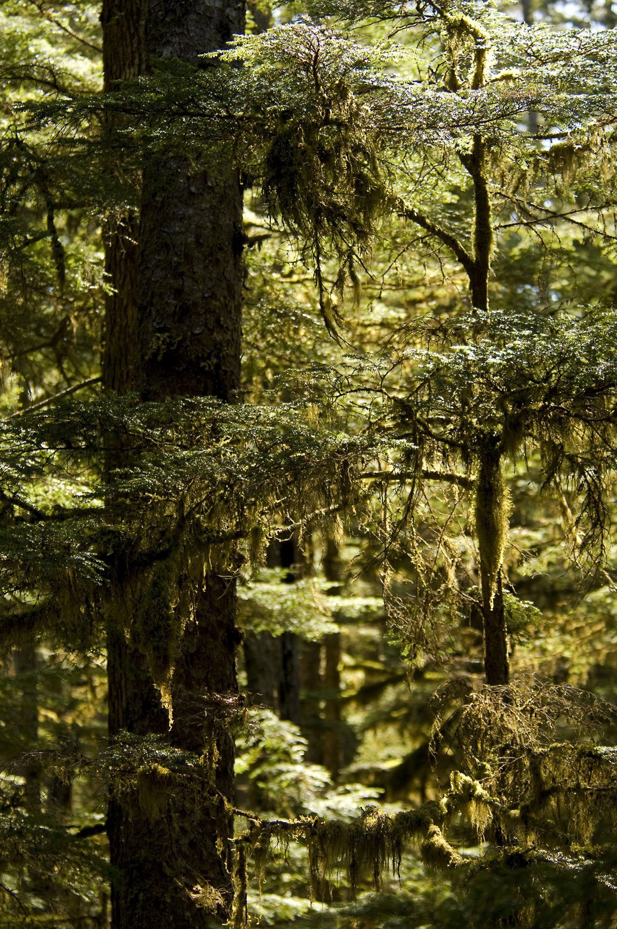 Forests of spruce, hemlock and cedar cover much of Southeast Alaska.