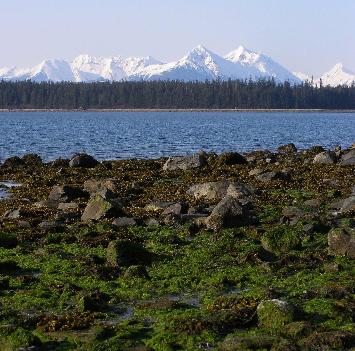 First glimpses of Glacier Bay.