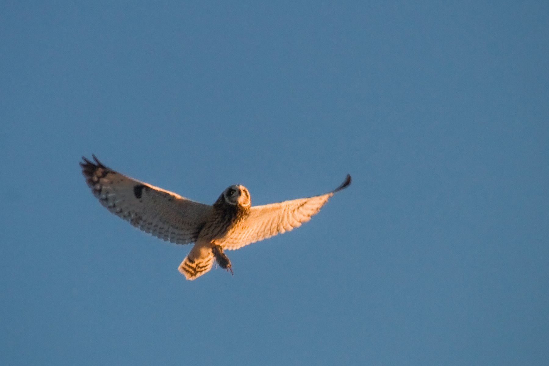 Owls are typically nighttime hunters.