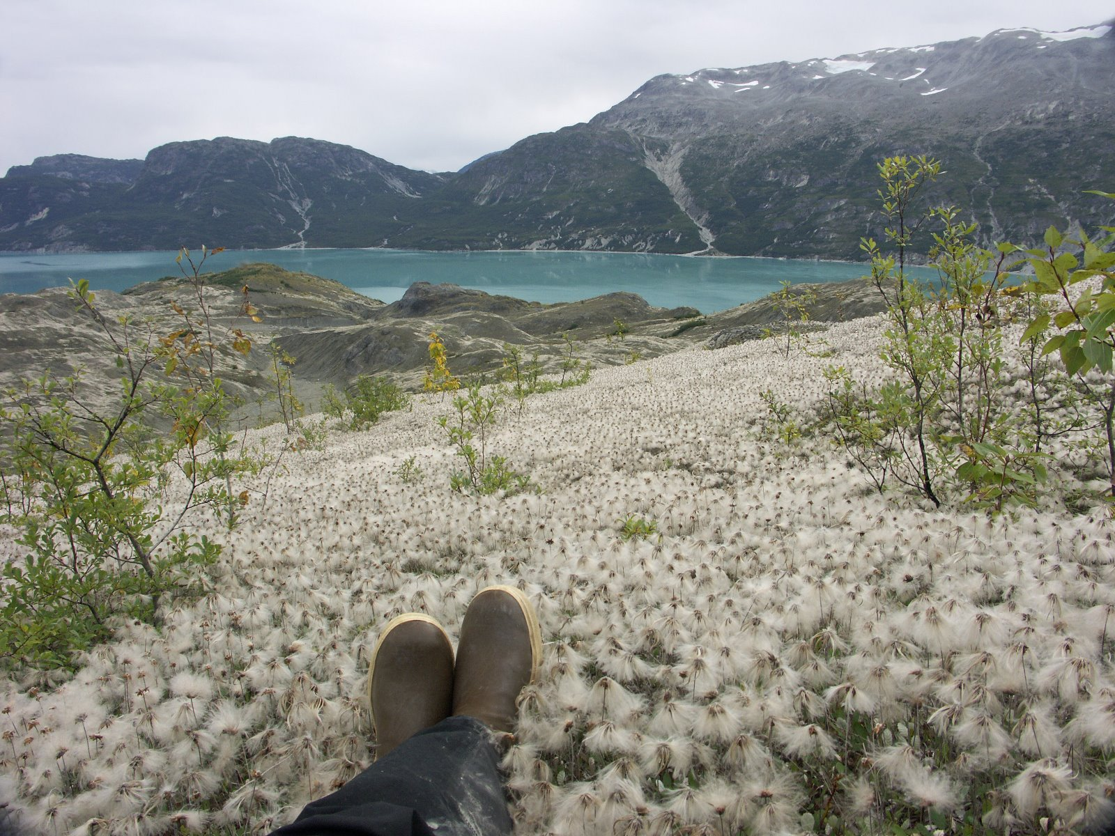 Changeable Glacier Bay.