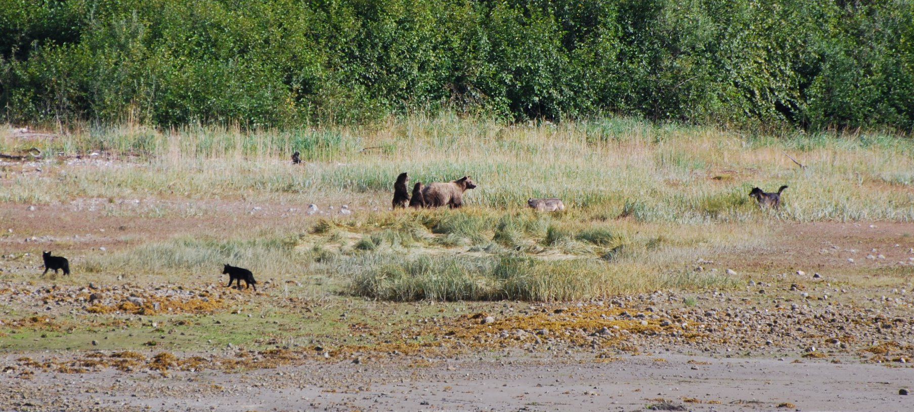 Brown bear and her cubs.