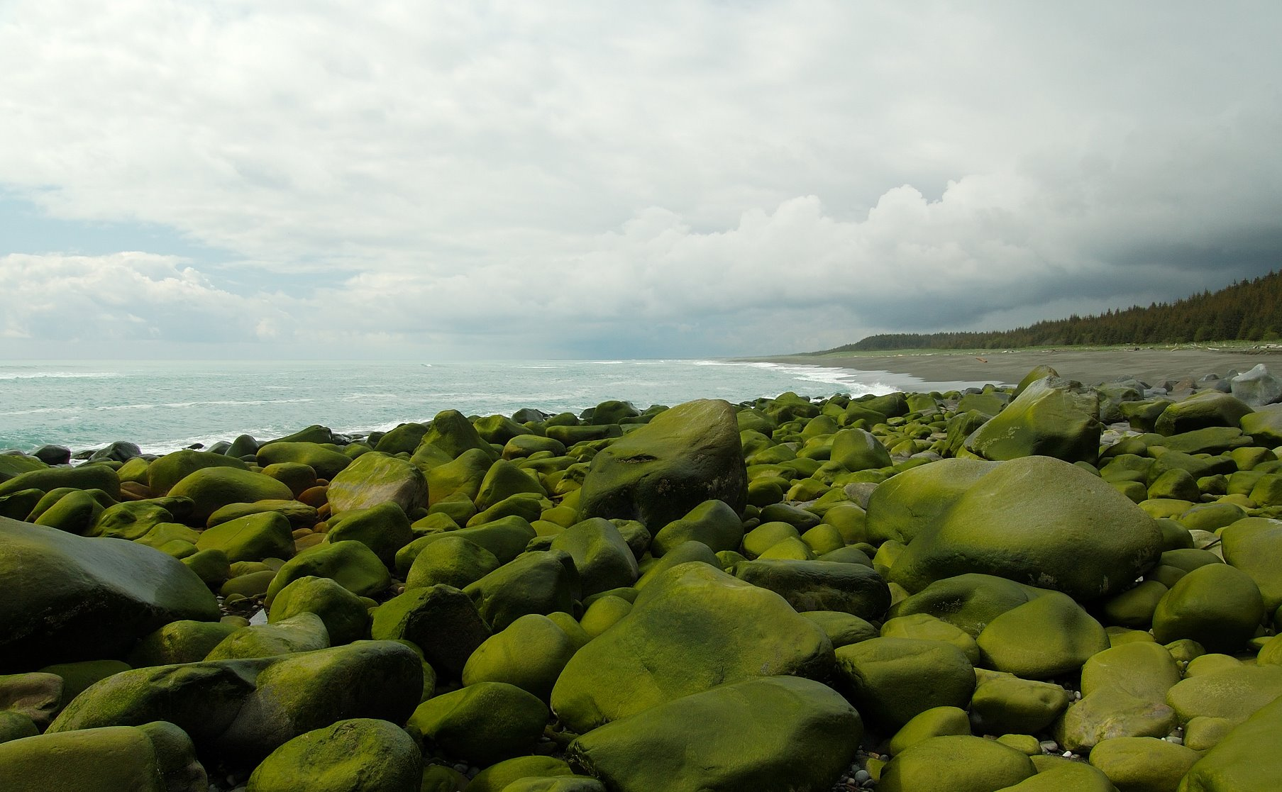 Algae covered glacial erratics on the outer coast.