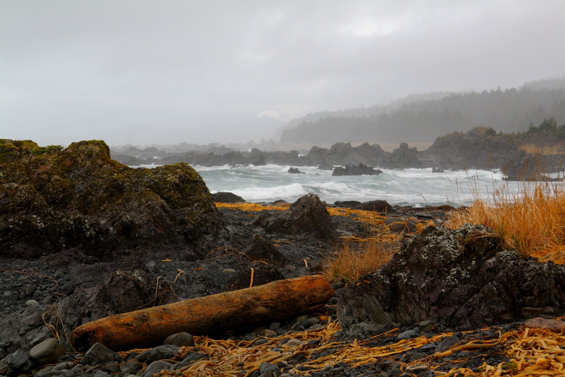 Icy Point - Glacier Bay Park's rugged outer coast.