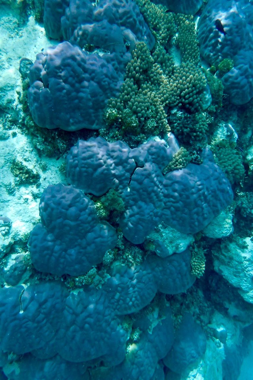 Kitava Island coral