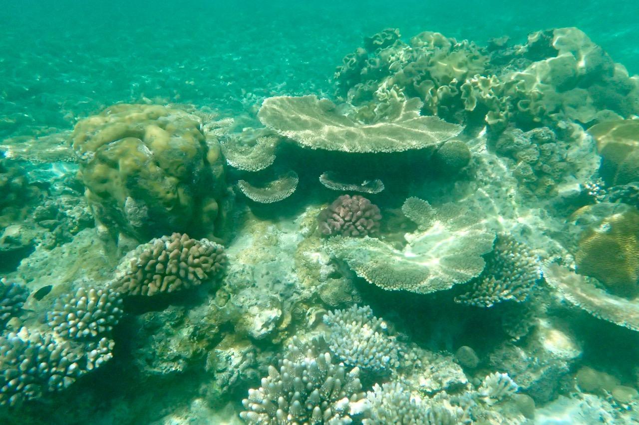 Doini Island coral snorkelling