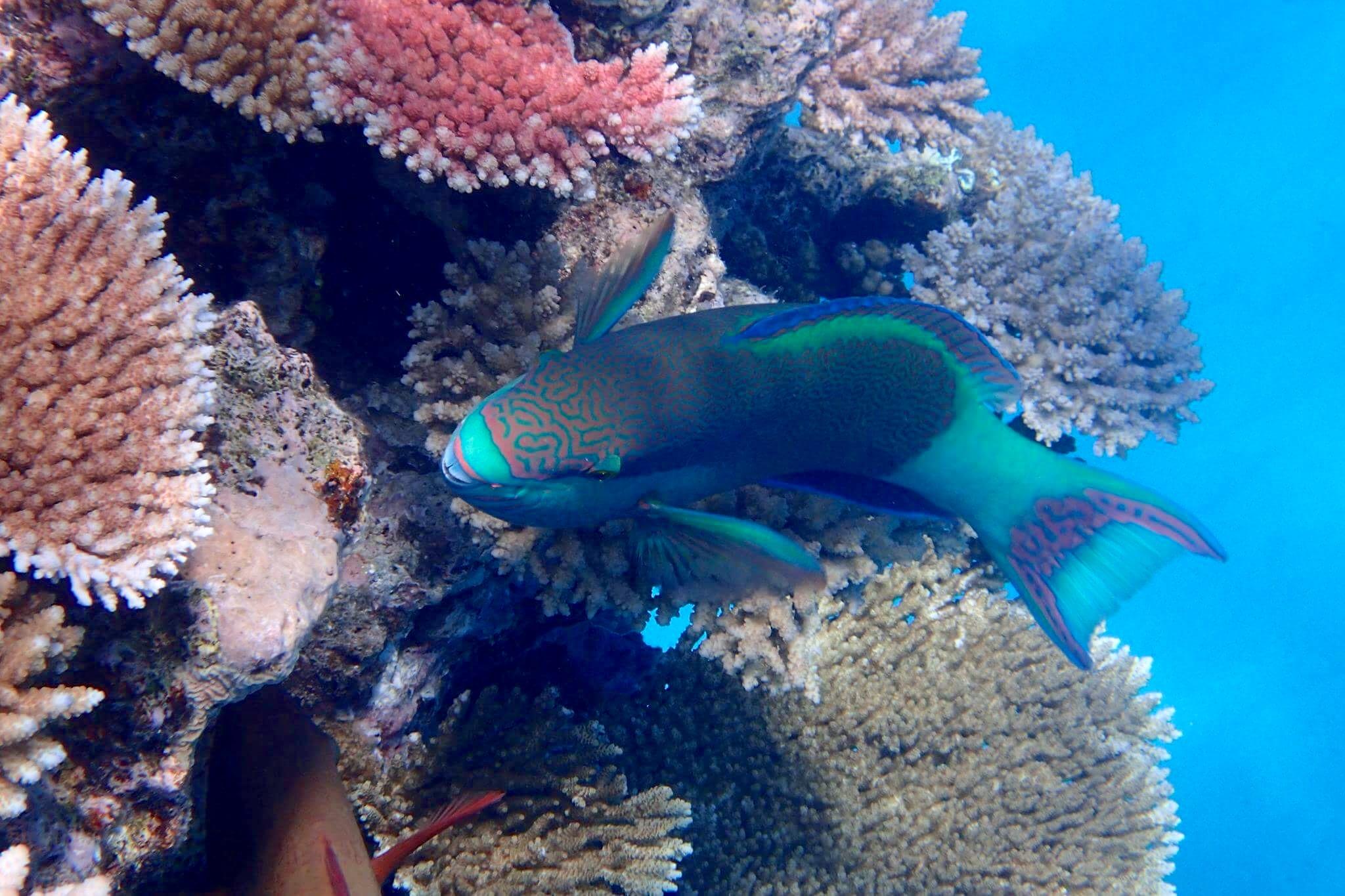 lodestone-reef-1