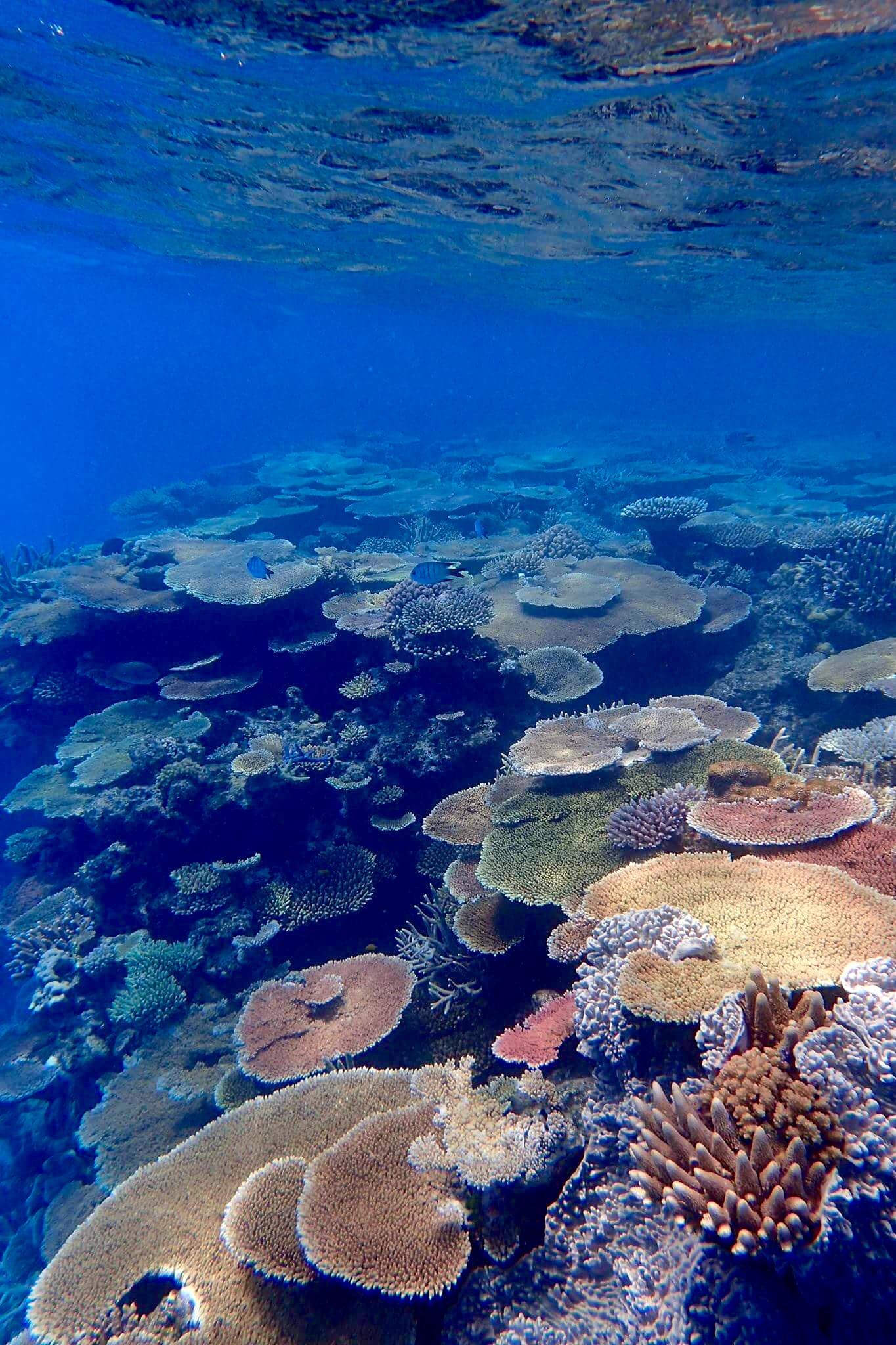 lodestone-reef-2