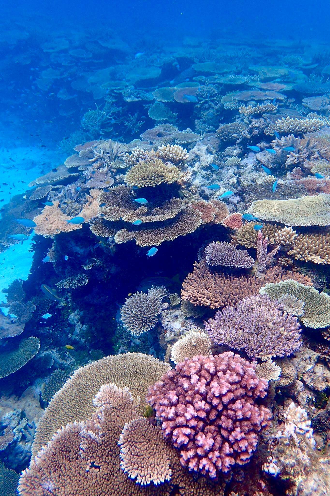 lodestone-reef-3