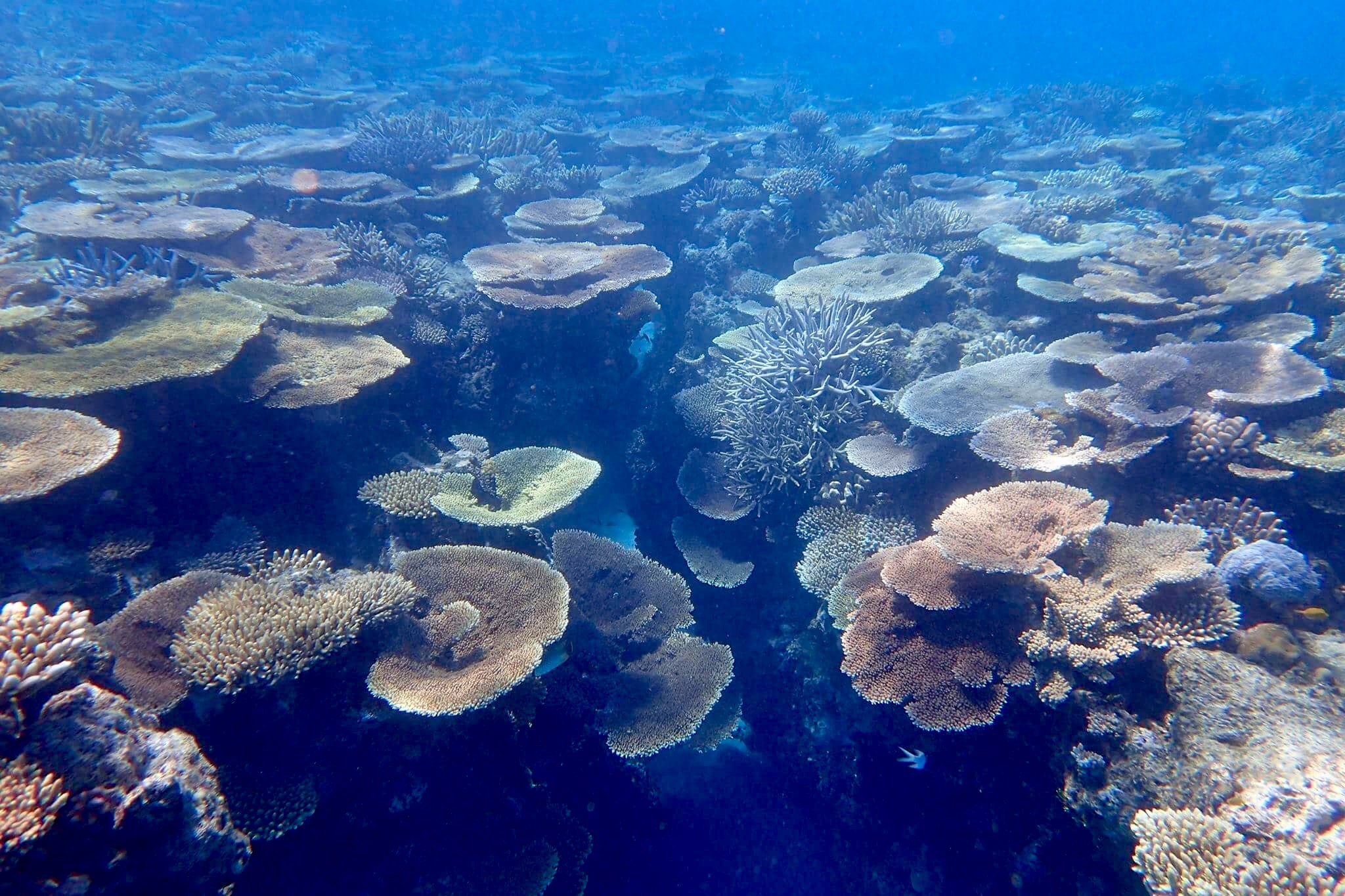 lodestone-reef-4